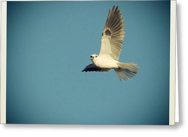 Flying Animal Greeting Cards - Ascension Greeting Card by Paul Topp