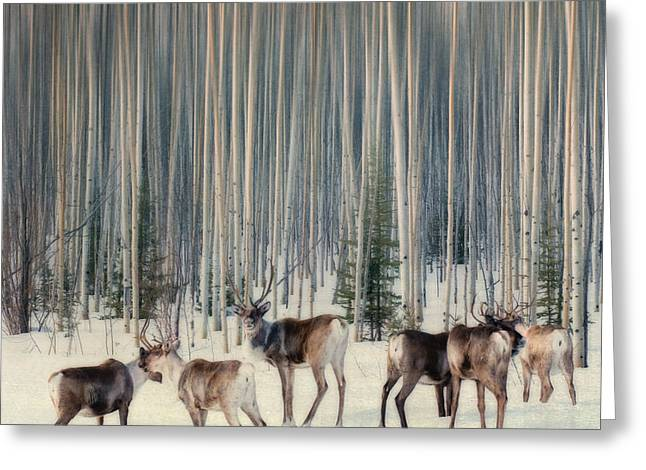 Wettstein Greeting Cards - Caribou and trees Greeting Card by Priska Wettstein