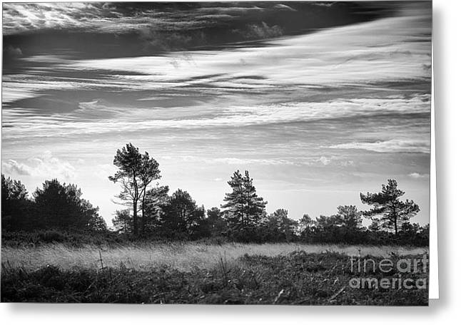 Nature Study Digital Greeting Cards - Ashdown Forest in Black and White Greeting Card by Natalie Kinnear
