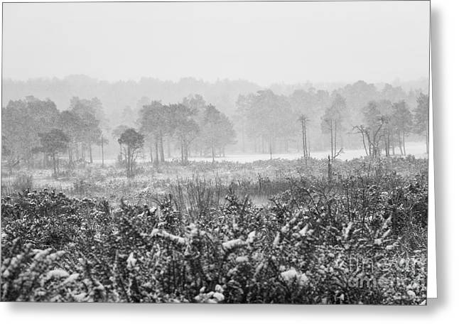 Lounge Digital Art Greeting Cards - Ashdown Forest in the Snow Greeting Card by Natalie Kinnear