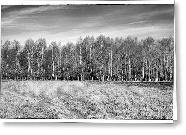 Nature Study Digital Greeting Cards - Ashdown Forest Trees in a Row Greeting Card by Natalie Kinnear