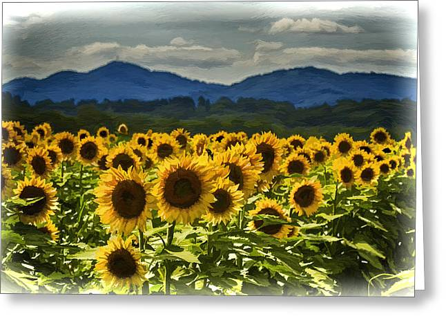 Carolina Greeting Cards - Asheville Sunflowers Greeting Card by John Haldane