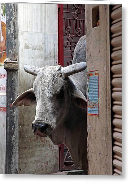 Asia, India, Varanasi Greeting Card by Kymri Wilt