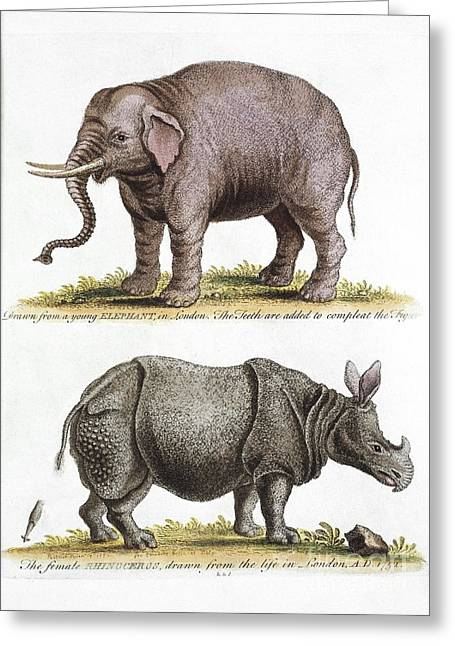 Gleaning Greeting Cards - Asian Elephant And Rhino, 18th Century Greeting Card by Natural History Museum, London