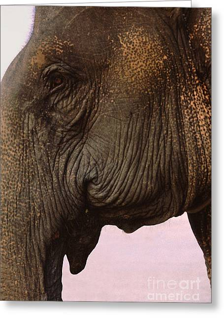 Sienna Greeting Cards - Asian Elephant in Thailand Greeting Card by Anna Lisa Yoder