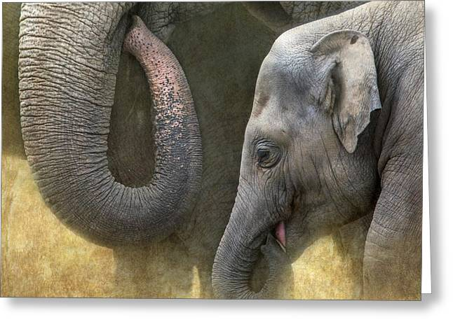 Elephant Greeting Cards - Asian Elephants Greeting Card by Angie Vogel