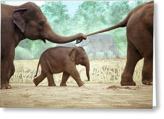 Rosamond Greeting Cards - Asian Elephants Greeting Card by Marianne Miles