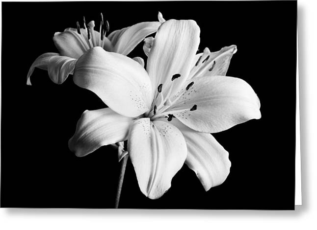 B Greeting Cards - Asian Lilies 1 Greeting Card by Sebastian Musial