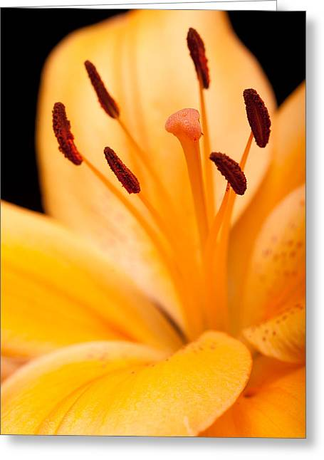 Mothers Day Greeting Cards - Asian Lily Greeting Card by Sebastian Musial