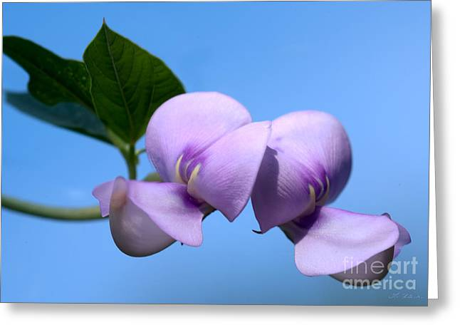 Owner Greeting Cards - Asian Purple Bean Blossoms Greeting Card by Iris Richardson