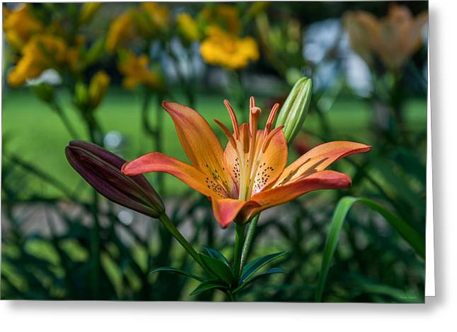 Asiatic Lily Greeting Card by Mark Papke
