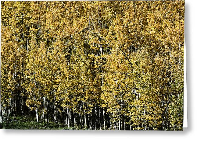 Award Winning Art Greeting Cards - Aspen All Around Greeting Card by David Kehrli