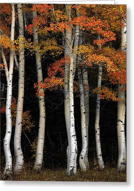 Aspen Contrast Greeting Card by Leland D Howard