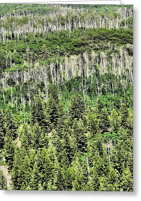 Gravel Road Greeting Cards - Aspen Forest Greeting Card by Dan Sproul