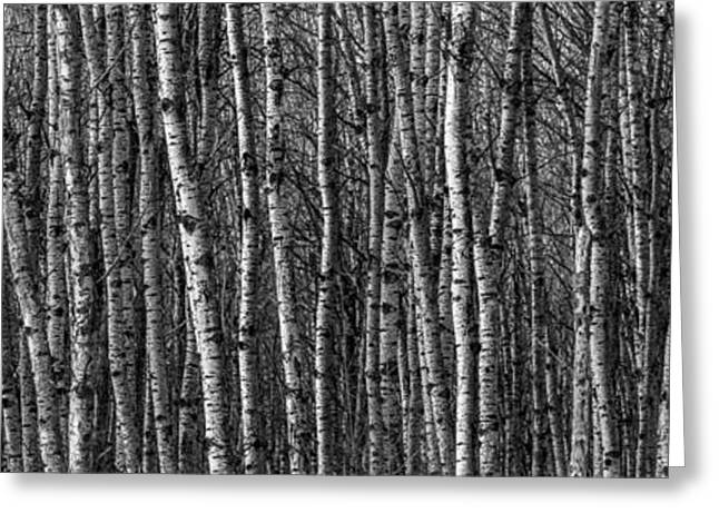 Peaceful Scene Greeting Cards - Aspen Forest Greeting Card by Paul Freidlund