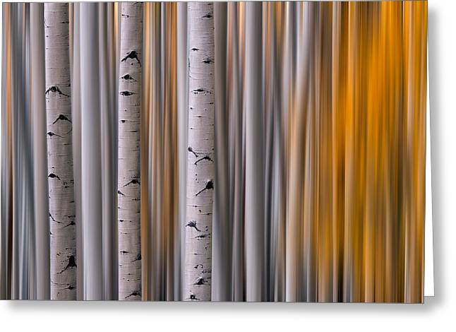 Colorado Captures Greeting Cards - Aspen Gold Abstract Greeting Card by Mike Berenson
