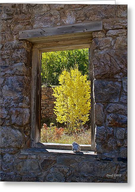 Nikkor Greeting Cards - Aspen Gold Through Time Greeting Card by Stephen  Johnson