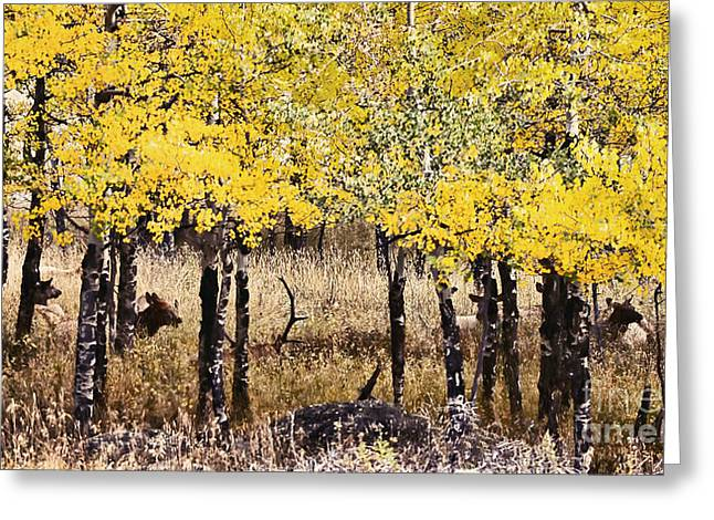 Catherine Greeting Cards - Aspen Grove Afternoon Greeting Card by Catherine Fenner