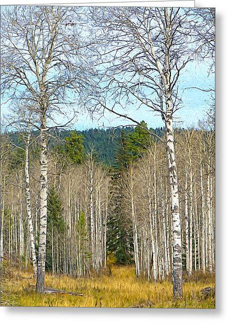 British Columbia Mixed Media Greeting Cards - Aspen Grove digital oil painting Greeting Card by Sharon  Talson