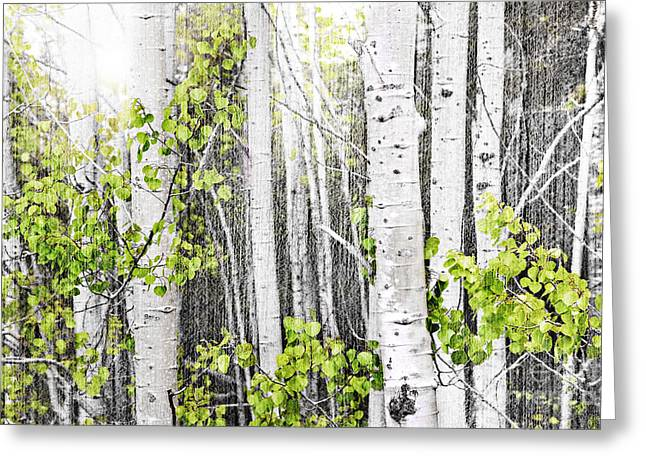 Shining Light Greeting Cards - Aspen grove Greeting Card by Elena Elisseeva