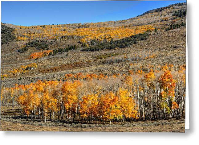 Fir Trees Greeting Cards - Aspen Grove Grand Staircase Escalate Greeting Card by Stephen Campbell