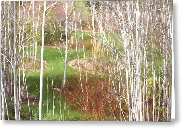Saxon Holt Greeting Cards - Aspen Grove - Green Grass Greeting Card by Saxon Holt