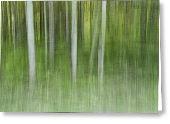 Abstractions Greeting Cards - Aspen Grove  Greeting Card by Priska Wettstein