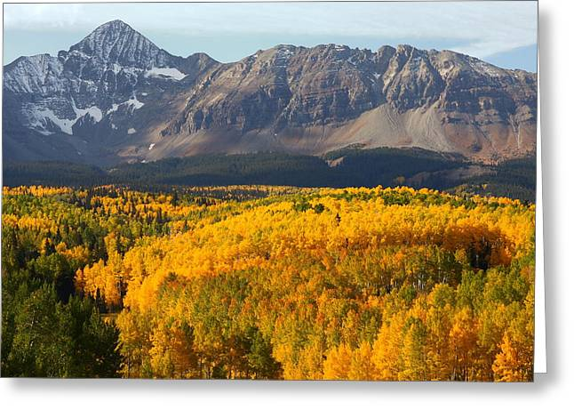 Mount Wilson Greeting Cards - Aspen groves from Silver Pick road Greeting Card by Jetson Nguyen
