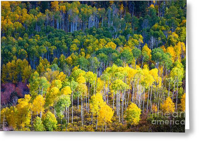 Direction Greeting Cards - Aspen HIllside Greeting Card by Inge Johnsson