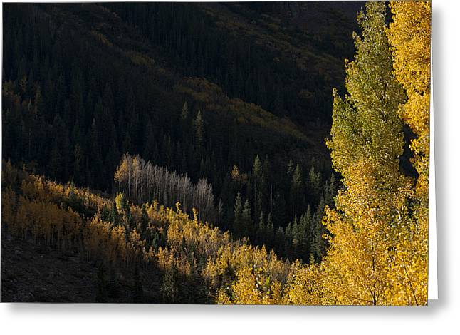 Fineartamerica Greeting Cards - Aspen Hillside Greeting Card by Jim Tobin