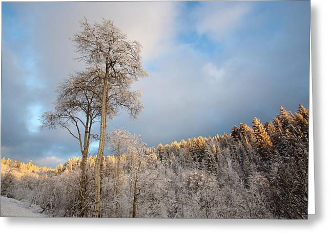 Snow-covered Landscape Photographs Greeting Cards - Aspen in Blue Greeting Card by David Andersen