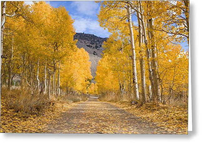 Ghose Greeting Cards - Aspen Lane Wide Crop Greeting Card by Priya Ghose