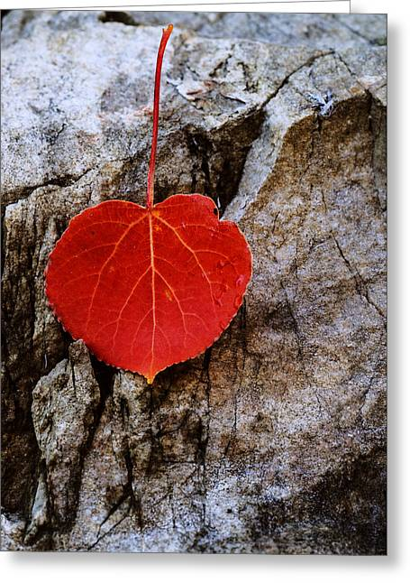 Aspens In Autumn Leaves Greeting Cards - Aspen leaf fallen on rock Greeting Card by Vishwanath Bhat