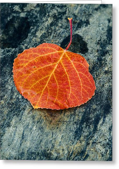 Aspens In Autumn Leaves Greeting Cards - Aspen leaf  Greeting Card by Vishwanath Bhat