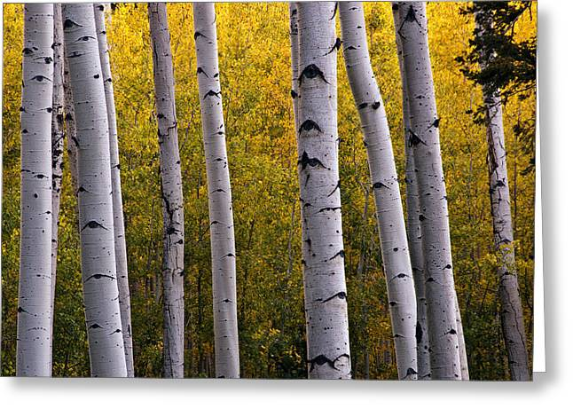 Turning Leaves Photographs Greeting Cards - Aspen Light 2 Greeting Card by Dave Dilli