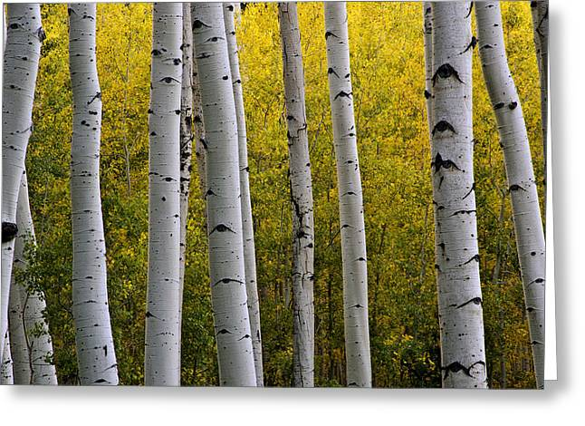 Quaking Aspen Greeting Cards - Aspen Light 3 Greeting Card by Dave Dilli