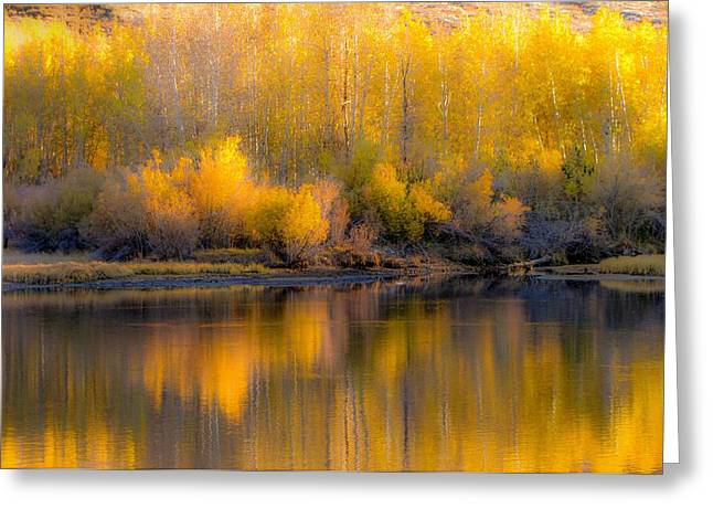 Trees Reflecting In Water Greeting Cards - Aspen Reflections Greeting Card by Leslie Wells