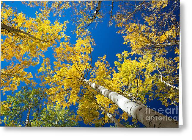 Colorful Bark Greeting Cards - Aspen Sky Greeting Card by Inge Johnsson