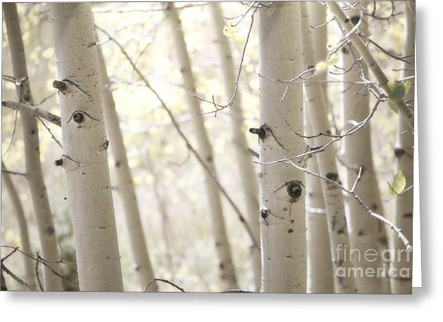 Sandias Greeting Cards - Aspen Tree Branches Greeting Card by Andrea Hazel Ihlefeld