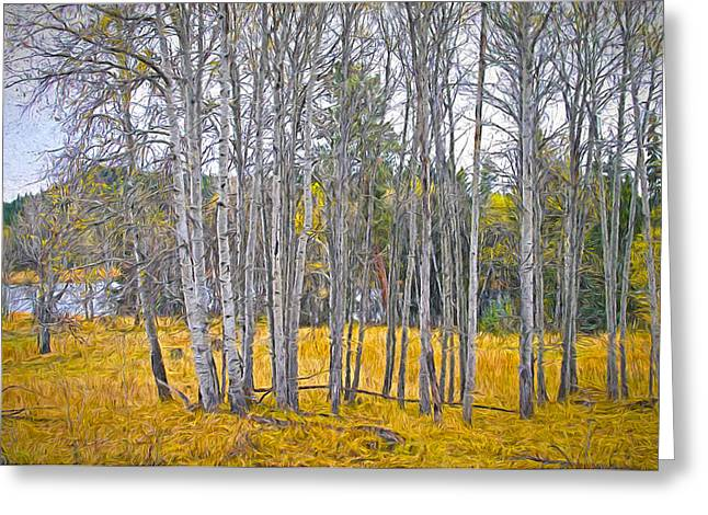 British Columbia Mixed Media Greeting Cards - Aspen Tree Grove digital oil painting Greeting Card by Sharon  Talson