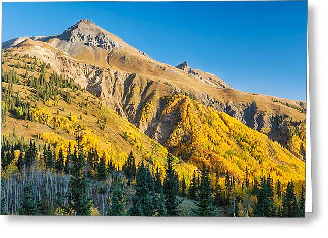 Autumn Colors Greeting Cards - Aspen Tree On A Mountain, Coal Bank Greeting Card by Panoramic Images