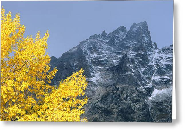 Overcast Day Greeting Cards - Aspen Tree With Mountains Greeting Card by Panoramic Images