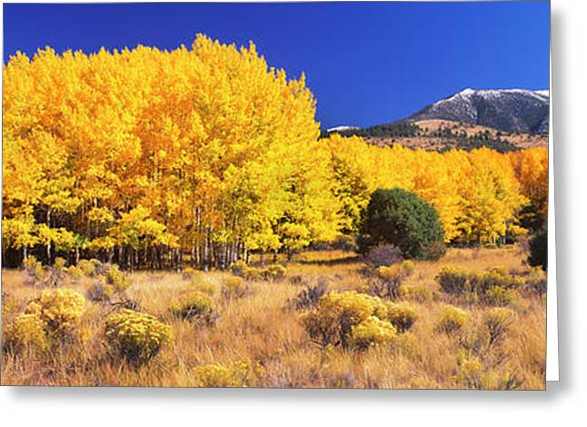 Aspen Tree With Sangre De Cristo Greeting Card by Panoramic Images