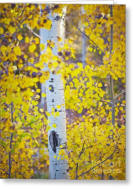 Sangre De Cristo Greeting Cards - Aspen tree yellow fall foliage Greeting Card by Matt Suess