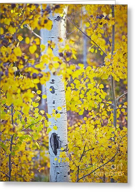 Sangre De Cristo Mountains Greeting Cards - Aspen tree yellow fall foliage Greeting Card by Matt Suess
