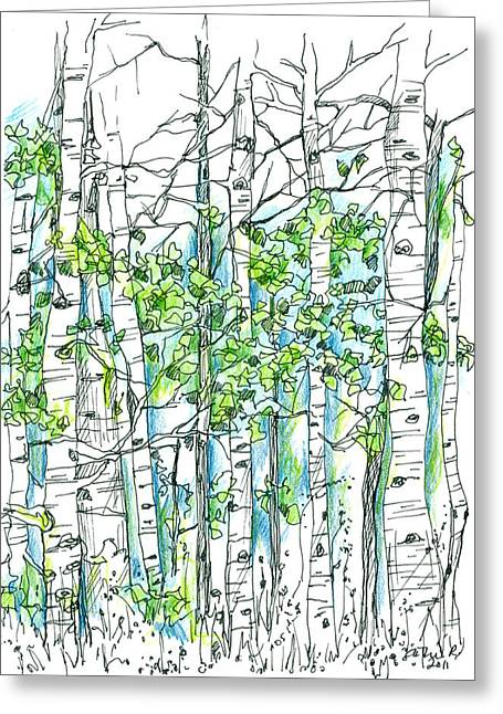 Pen And Ink Drawing Greeting Cards - Aspen Trees Greeting Card by Cathie Richardson