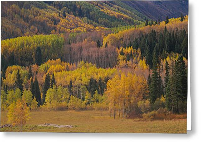 Nature Scene Greeting Cards - Aspen Trees In A Field, Maroon Bells Greeting Card by Panoramic Images