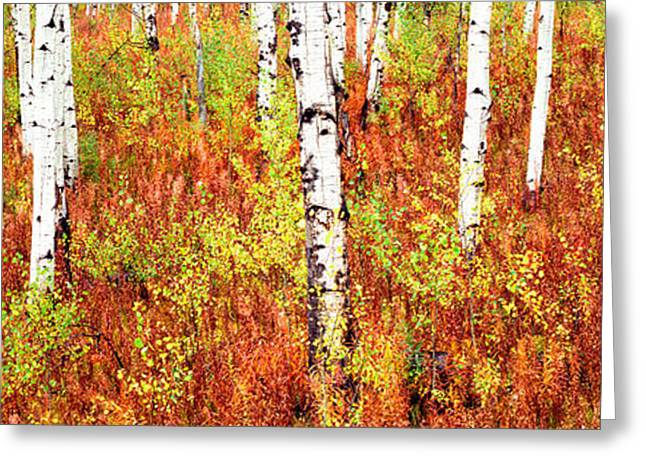 Fall Scenes Greeting Cards - Aspen Trees In A Forest, Shadow Greeting Card by Panoramic Images