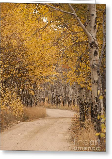 Dirt Image Greeting Cards - Aspen Trees in Autumn Greeting Card by Juli Scalzi
