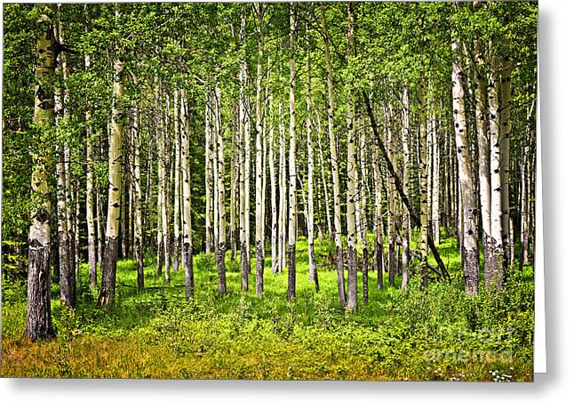 Beautiful Scenery Greeting Cards - Aspen trees in Banff National park Greeting Card by Elena Elisseeva